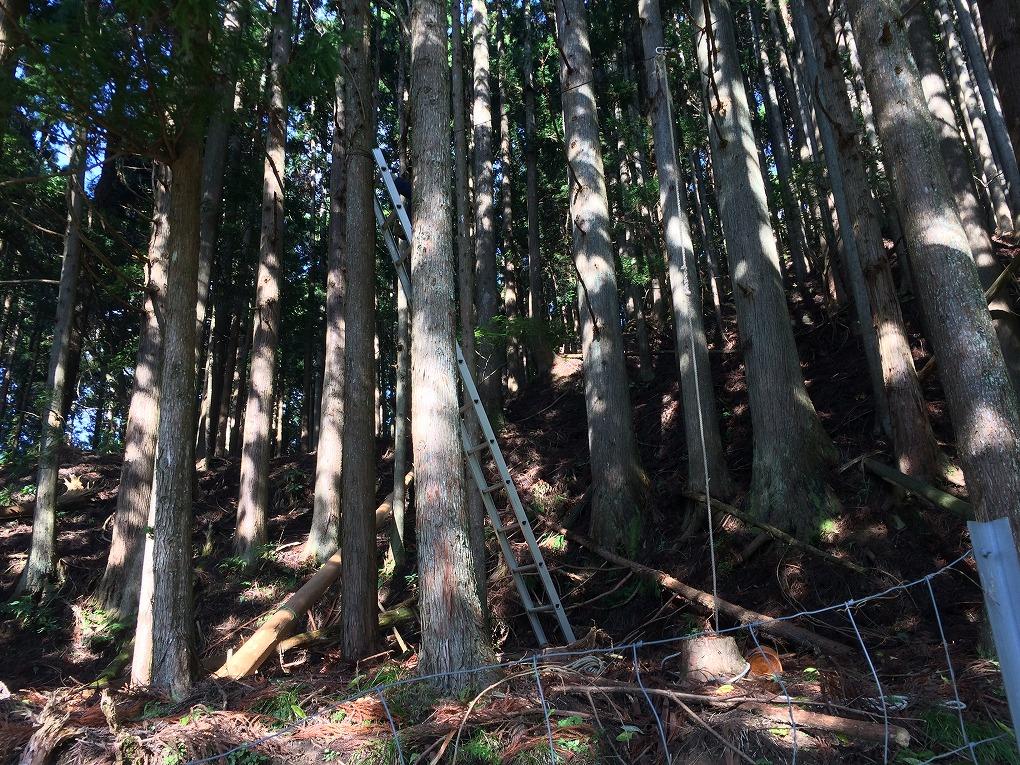 木から木にワイヤーを渡す写真